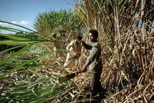 Ahwazi MP Attacks Discrimination by Sugarcane Plantations